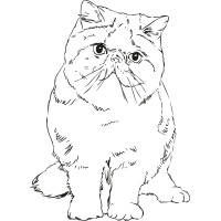 icon-persian