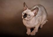 Кошка Imbri Sans Phrases