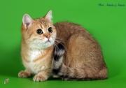 Кошка Int.Ch.Franziska vom Kreuzanger. Германия